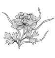 decorative peony vector image vector image