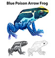 doodle animal for blue poison arrow frog vector image