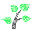 flora plant composition of dollar and dots vector image vector image