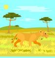 jungle safari wild nature and animal lioness vector image vector image