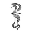 vintage design with snake on dagger for poster vector image