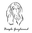 Beagle Greyhound vector image