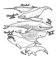 collection graphic whales vector image