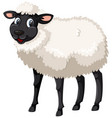 cute black and white sheep vector image
