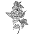 Doodle art flowers Zentangle hydrangea pattern vector image vector image