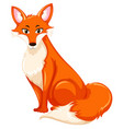 a red fox on white backgroud vector image