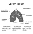 Lung structure infographic vector image vector image