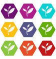 tea leaf sprout icon set color hexahedron vector image vector image