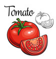 tomato drawing icon vector image
