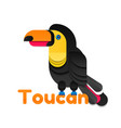 toucan of colored paper vector image vector image