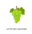 autumn green grapes white vector image