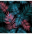 Palm tree foliage vector image