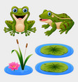 set of cartoon frog and water lily vector image vector image