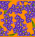 dark blue purple iris flower on orange background vector image vector image