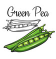 green pea drawing icon vector image vector image