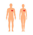 heart of man man and woman on a white background vector image vector image