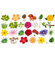 large group isolated objects theme - flowers vector image vector image