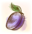 Plum watercolor painting vector image vector image
