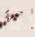 three birds on pine tree branch traditional vector image vector image