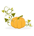 ripe pumpkin with swirly leafy stem vector image