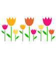 Colorful spring Tulips in row isolated on white vector image vector image