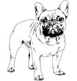 dog drawn with ink vector image vector image