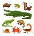 Reptiles And Amphibians Set vector image