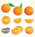 Set of oranges fruit in various styles vector image
