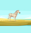 zebra in wild composition vector image vector image