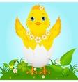Cute Baby Chicken vector image