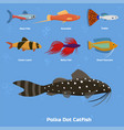 exotic tropical aquarium fish different colors vector image vector image
