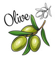 olive drawing icon vector image vector image