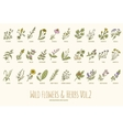 Wild flowers and herbs hand drawn set Volume 2 vector image vector image