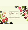 Berry horizintal banner vector image vector image