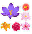 gorgeous flower buds isolated set vector image vector image