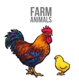 rooster and chicken poultry farm vector image