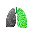 black and green human lungs vector image vector image