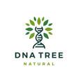 dna tree leaf logo icon vector image vector image