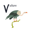 funny image a vulture and letter v zoo vector image