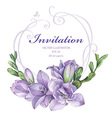 purple freesia flowers vector image