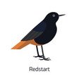 redstart isolated on white background small vector image vector image