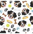 smiling dog bernese mountain dog vector image vector image