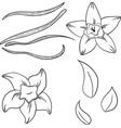 vanilla set in cartoon style vector image