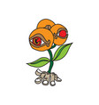 orange flowers cartoon concept vector image