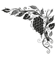 Wine vine border vector image vector image