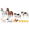 a set of farm animals on white background vector image