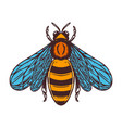 Bee in engraving style on white background design