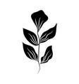 minimalist tattoo leaves foliage herb silhouette vector image vector image