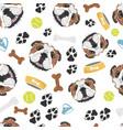 smiling dog english bulldog vector image vector image