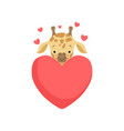 cute little giraffe with big red heart funny vector image